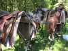 Horseback River Trails - Open Farm Day