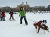 Skijoring - Kicksledding