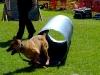Winnipeg Police Service Canine Unit