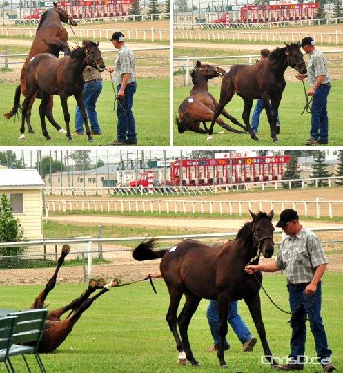 whoa  hold your horses  chrisd ca barrel racing horse clip art Barrel Racing Silhouette