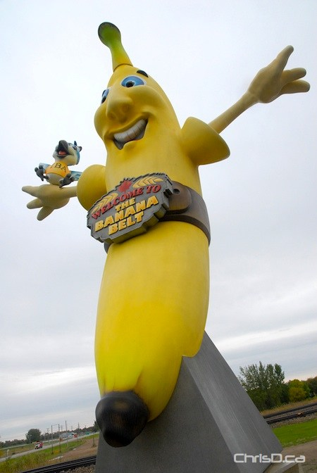 melita chooses name for giant banana statue. Black Bedroom Furniture Sets. Home Design Ideas